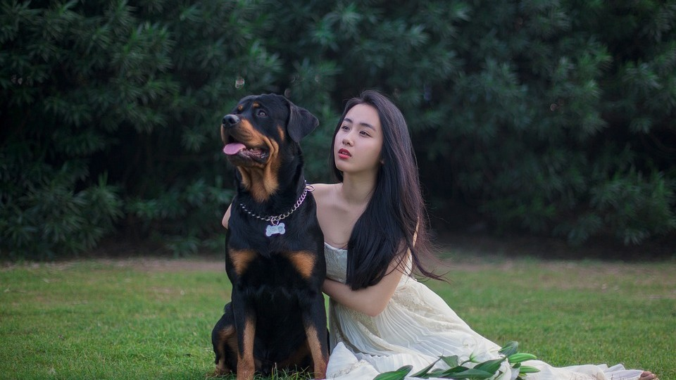 picnoi japanese lady and dog
